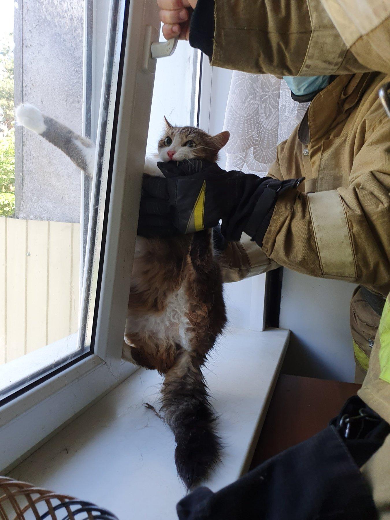 В Новом Осколе спасли застрявшую в оконной раме кошку, фото-1