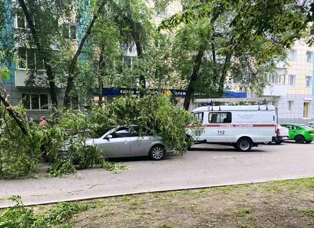 В Белгороде сильный ветер повалил деревья на авто, фото-1