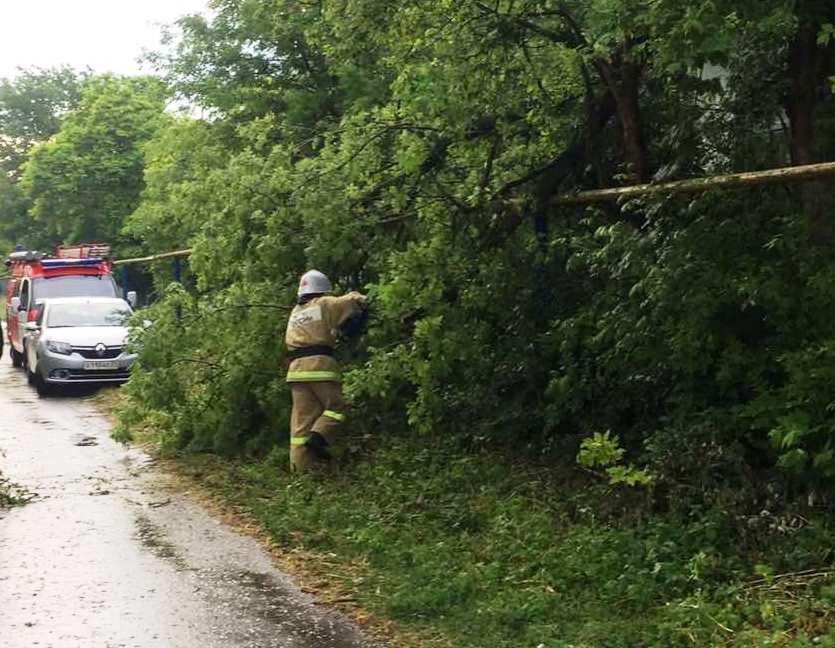 В Белгороде сильный ветер повалил деревья на авто, фото-2