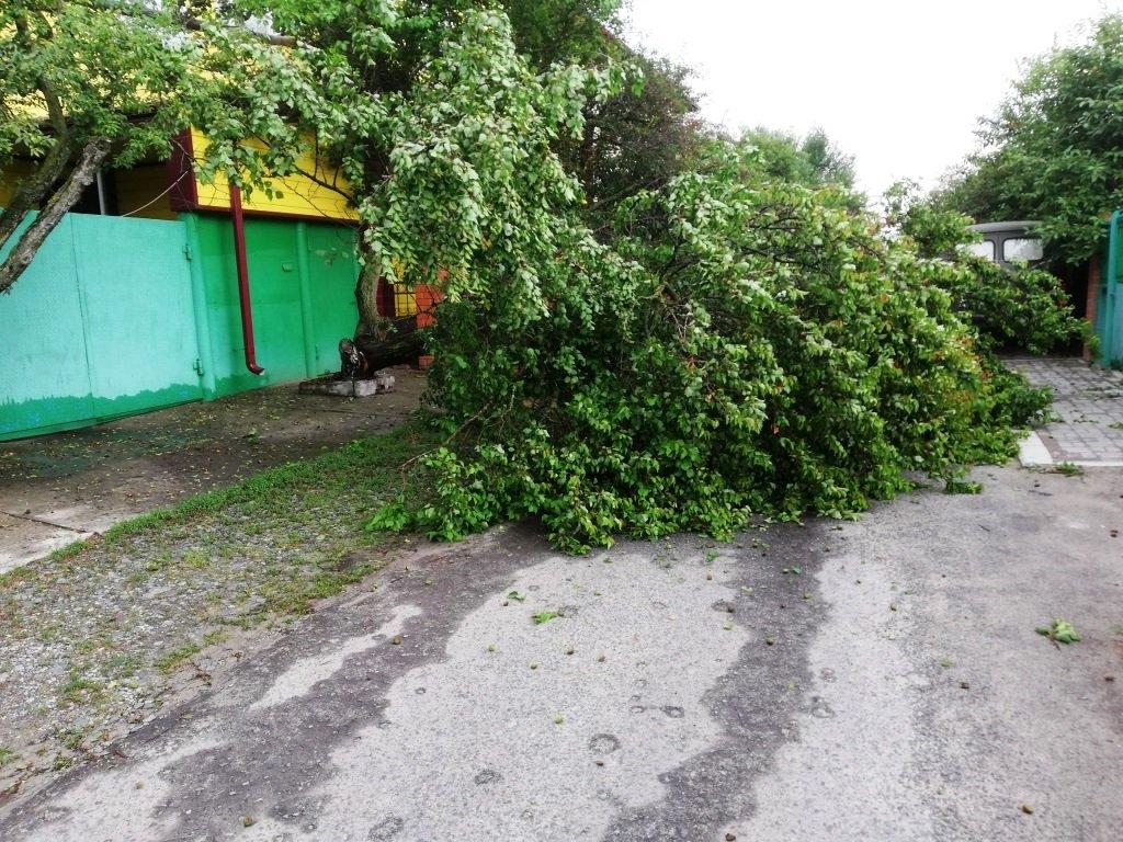 В Белгороде сильный ветер повалил деревья на машины, фото-2