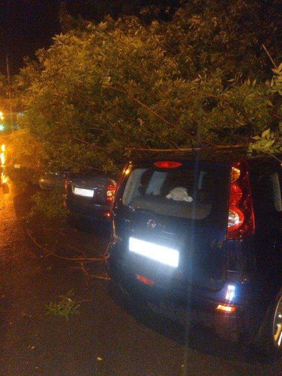 В Белгороде сильный ветер повалил деревья на машины, фото-1