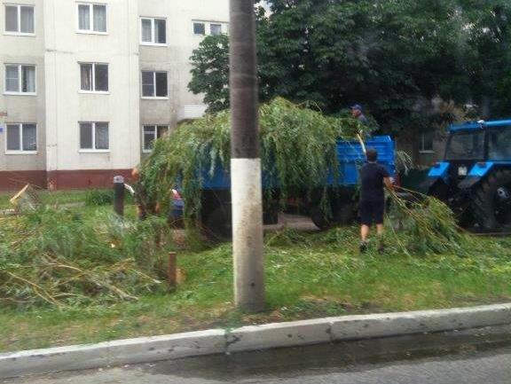 В Белгороде сильный ветер повалил деревья на машины, фото-4