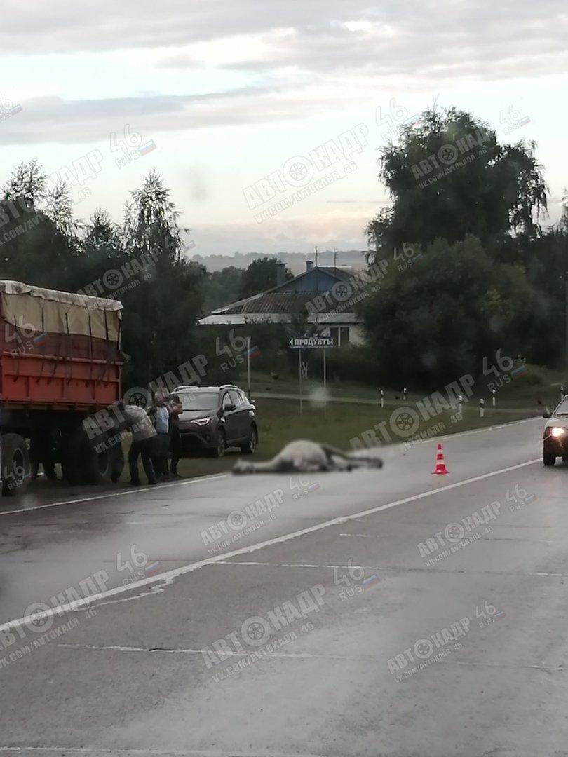 КамАЗ переехал лошадь и перевернулся под Курском, фото-2