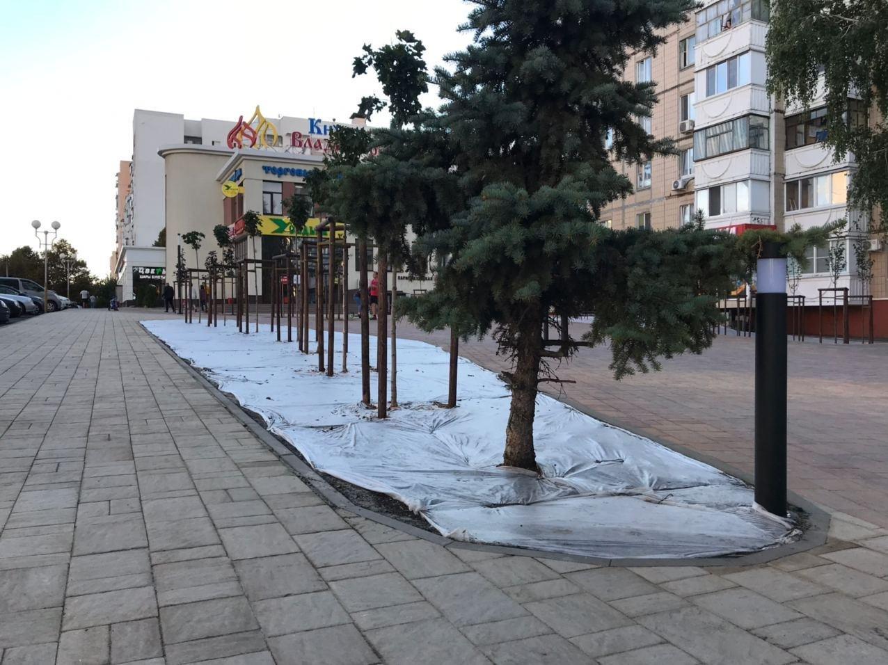 В Белгороде благоустроили сквер на улице Спортивной, фото-1