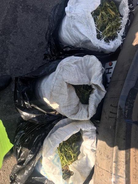 Полицейские нашли в машине белгородца 4 мешка с коноплёй, фото-2