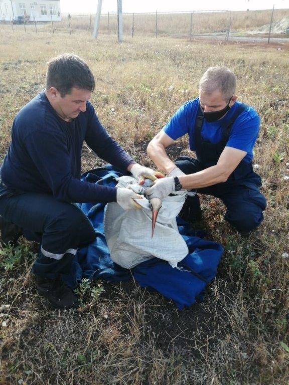 В Белгороде спасли аиста со сломанным крылом, фото-1