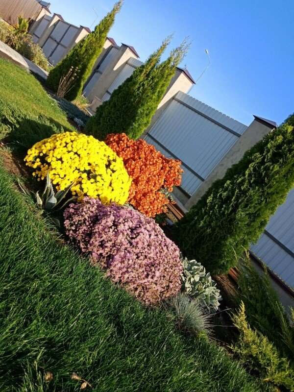 Мой дивный сад, Ирина Чемякина