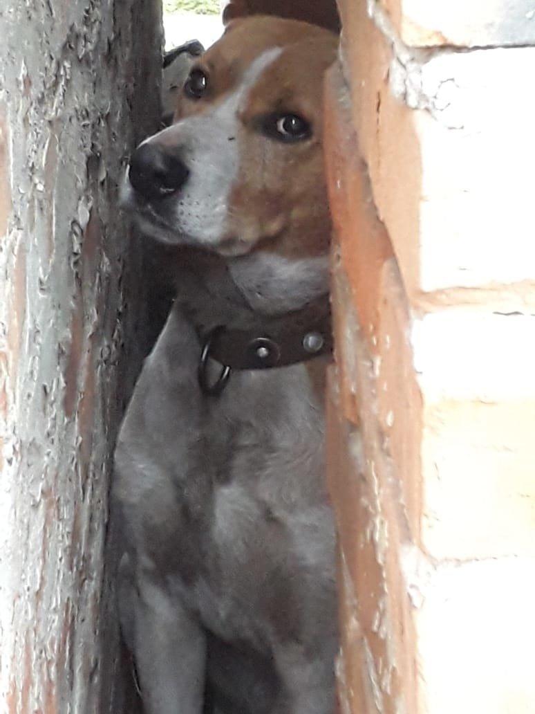 Застрявшая между стен собака, фото: МЧС