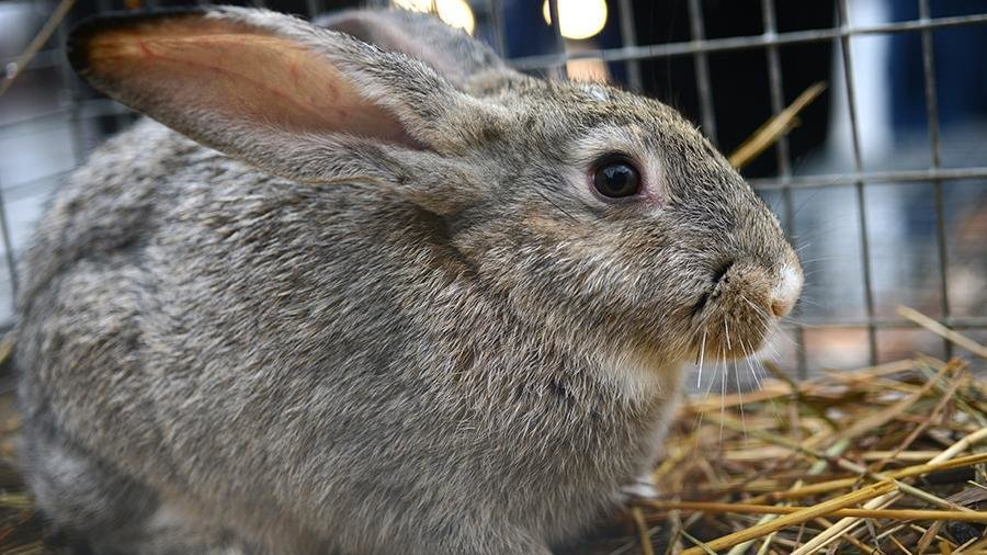 Кроликов вернули в Украину