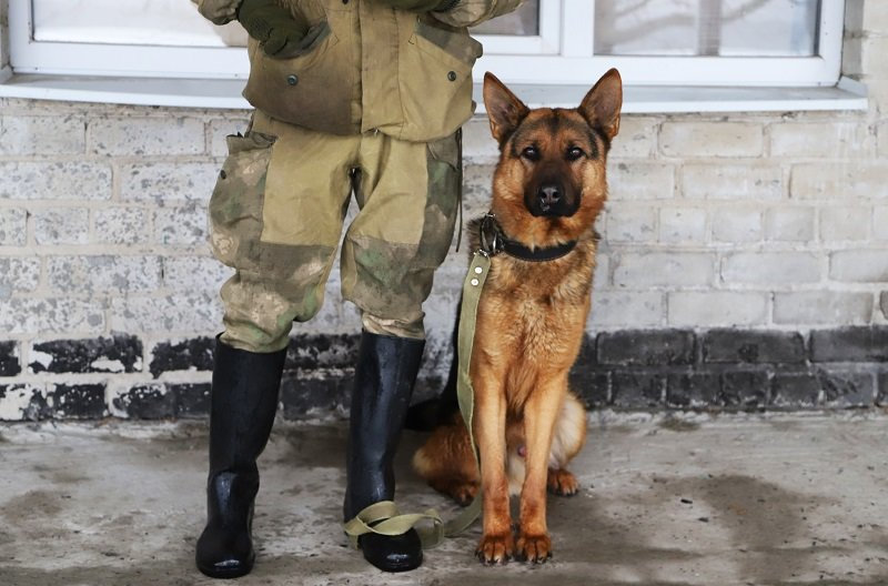 Служебные собаки Центра кинологической службы УМВД