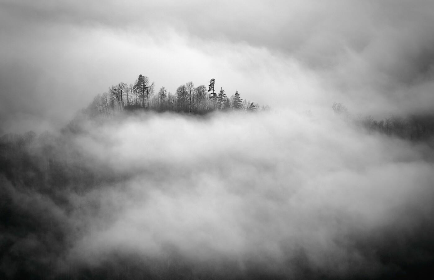 Небесный лес, Фото: Андрей Смольников