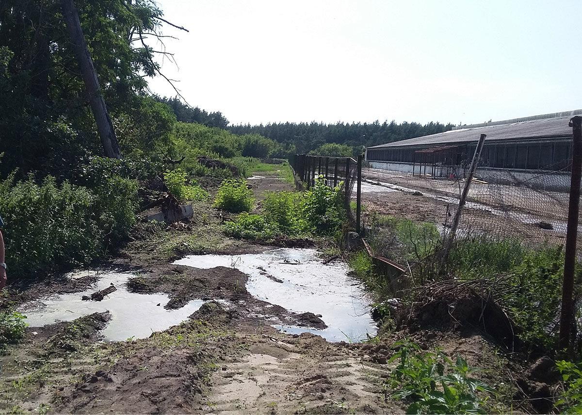 Белгородские животноводы заплатят более трёх миллионов рублей за гибель деревьев, фото-1