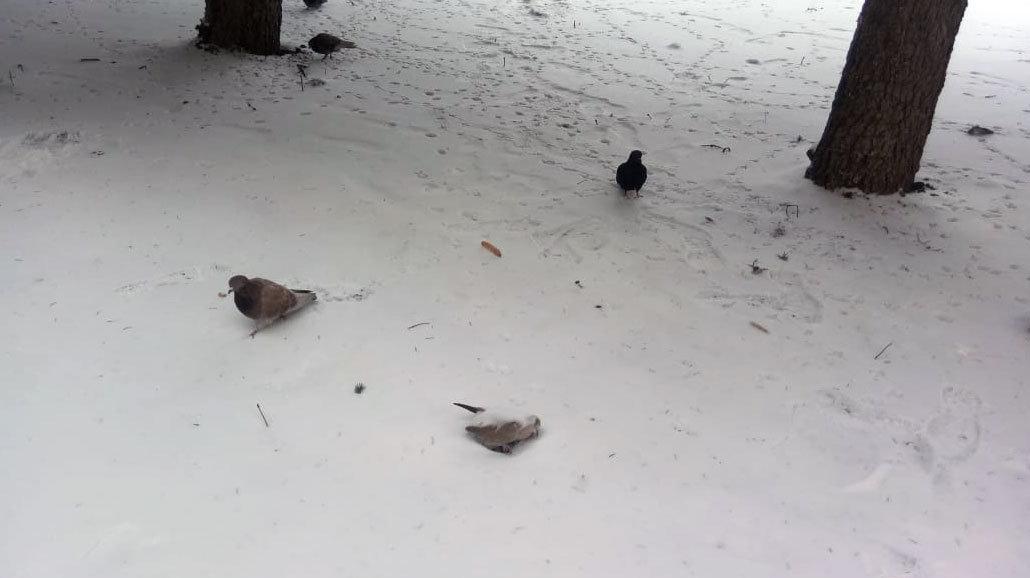 замёрзшие птицы, Максим Алтухов