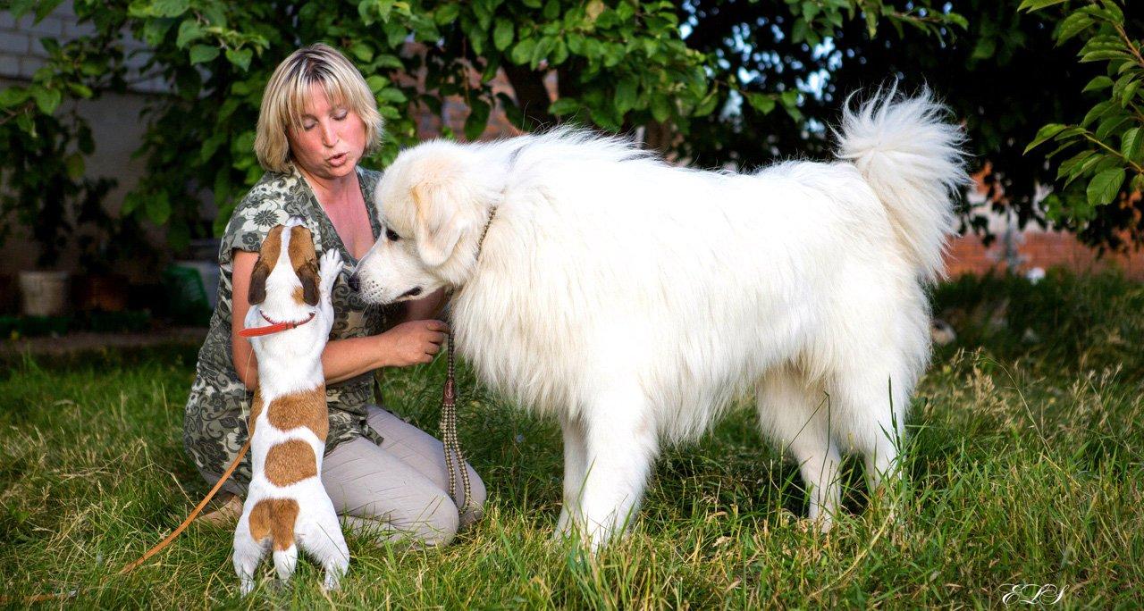 Елена Квитчастая и её собаки, Фото из личного архива