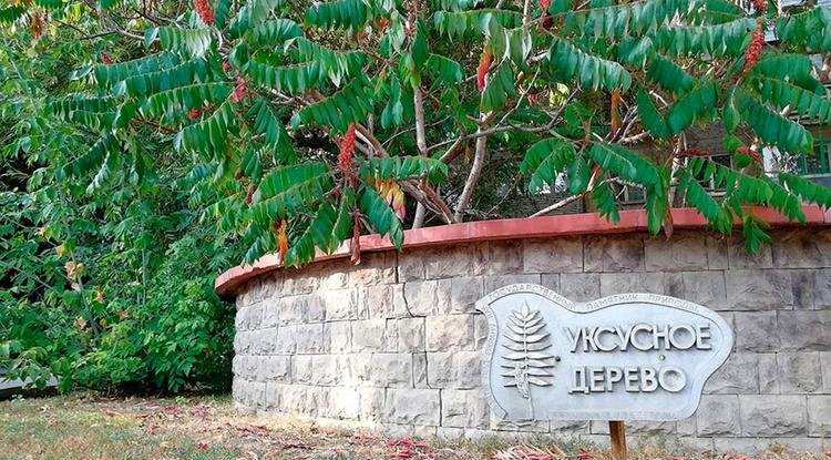 Памятник природы «Уксусное дерево», фото: Наталия Козлова