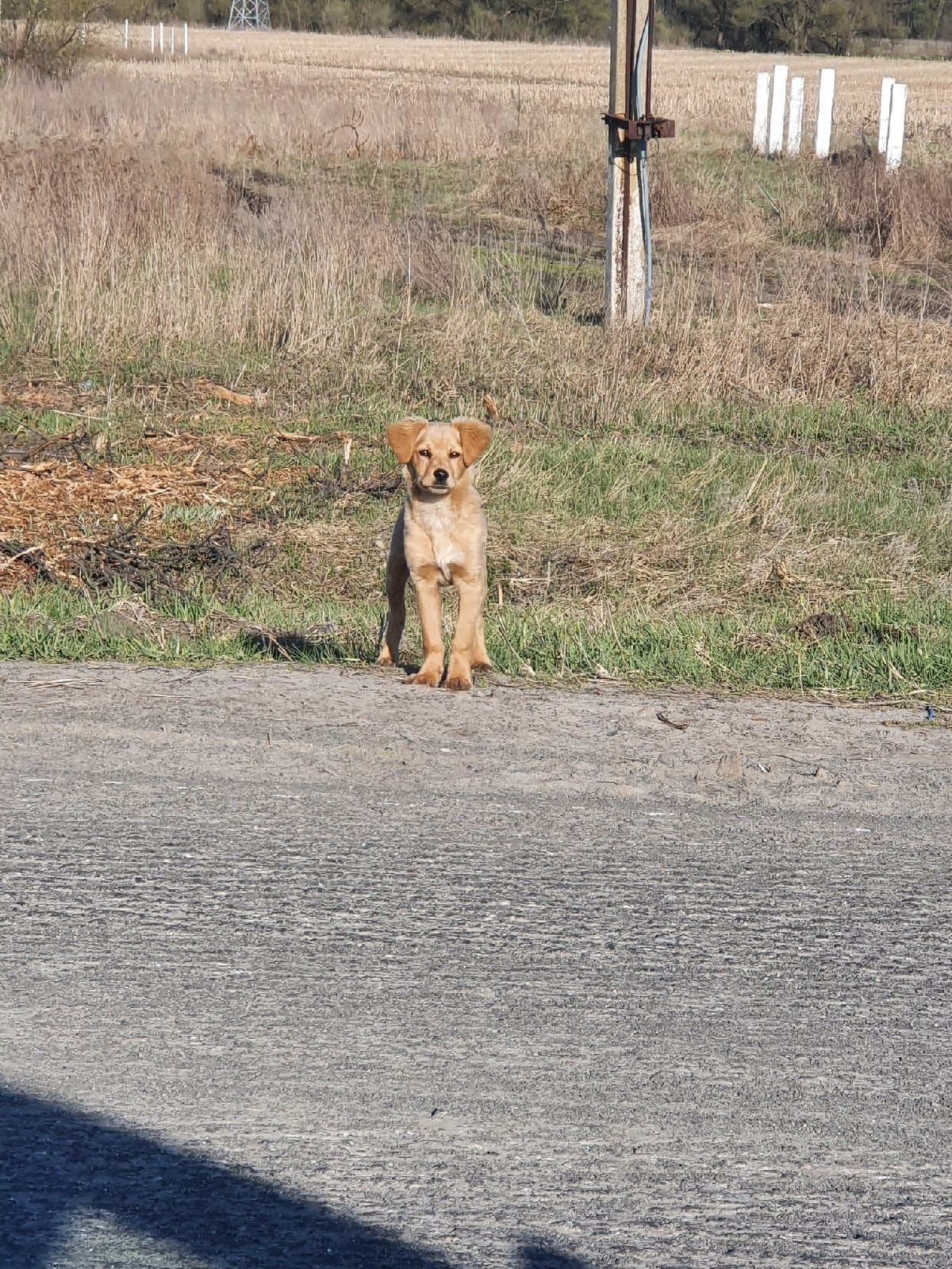 Мэр Старого Оскола приютил брошенного на дороге щенка, фото-1