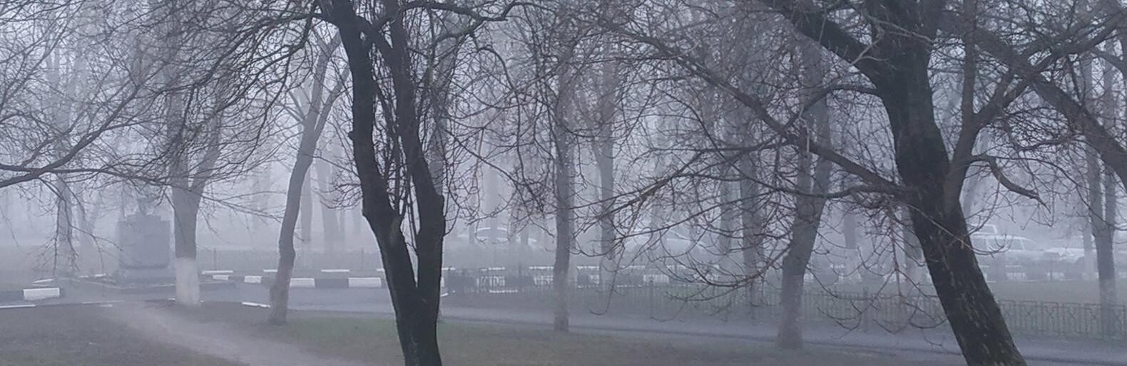 В Белгородской области неделя начнётся с тумана и гололедицы
